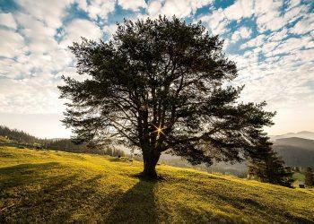 Ejercicio. El árbol de información