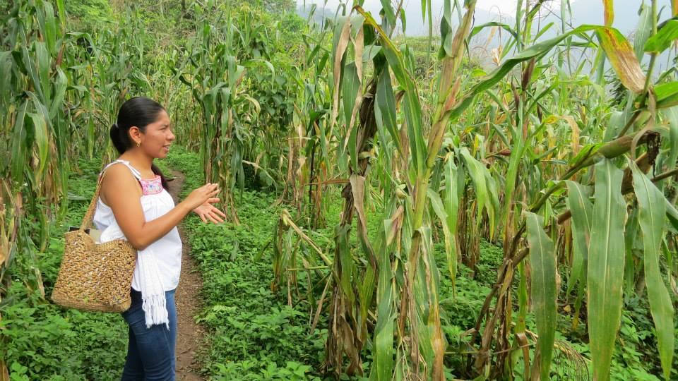 Gastronomía sostenible Olivia Bringas